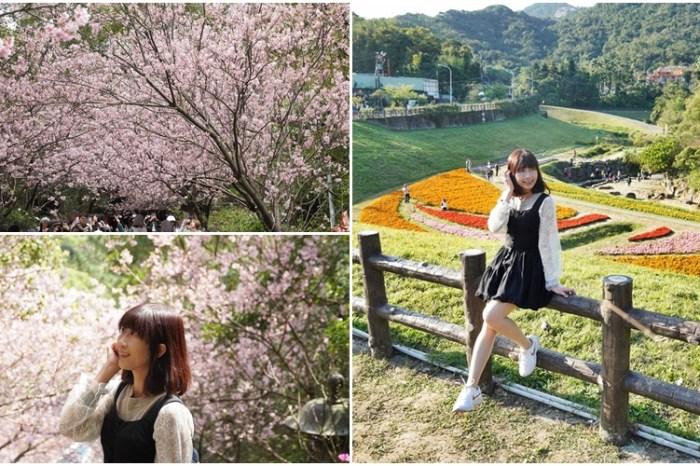 [內湖 碧山巖 大溝溪花海]走進最有日本味的櫻花隧道 繽紛色塊花海 春日限定美景