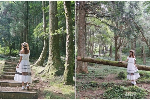 [桃園 東眼山國家森林遊樂區]  森林系小百岳征服記 不揮汗仙氣步道  來一場與山林的自我對話