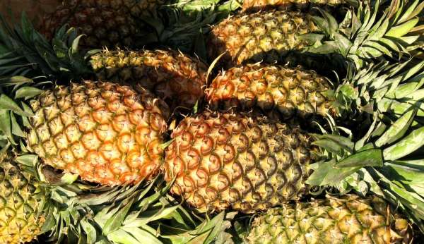 Visit our pineapple Farm
