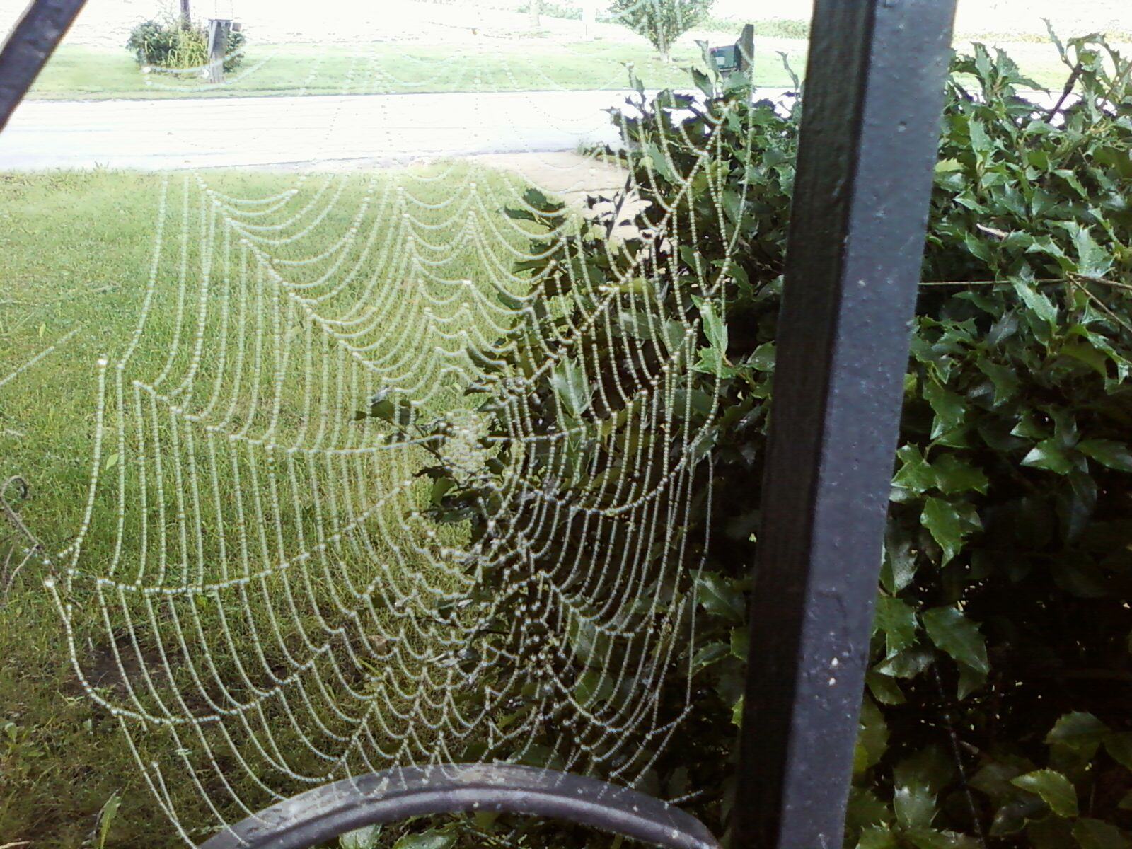 Spider Web After The Fog