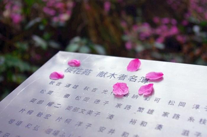 [2013花見] 哲學之道旁的秘境 – 櫻花苑