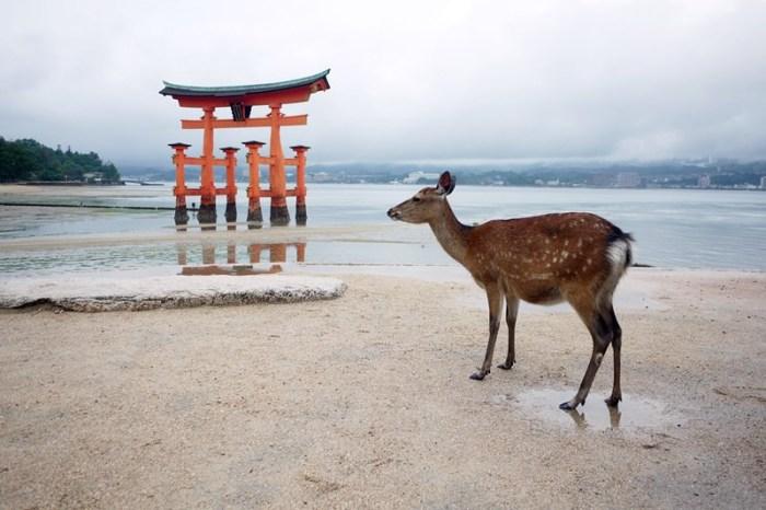 [廣島] 日本三景 – 退潮後的嚴島神社