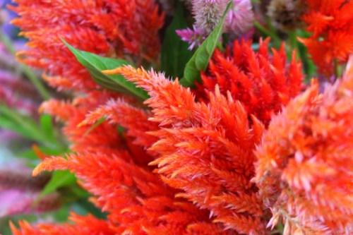 Soft Orange Flowers by @AnnieWearsIt via AnnieWearsIt.com