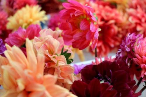 Dahlias by @AnnieWearsIt via AnnieWearsIt.com