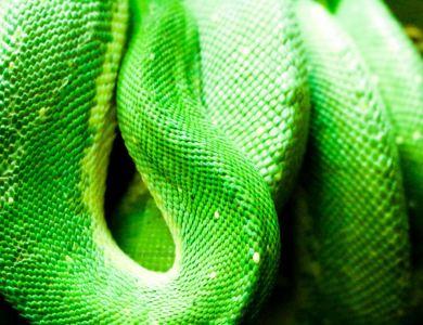 Toledo Zoo Part II: Birds, Reptiles & Mammals!