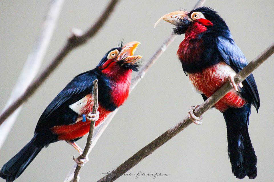 African Birds by Annie Fairfax