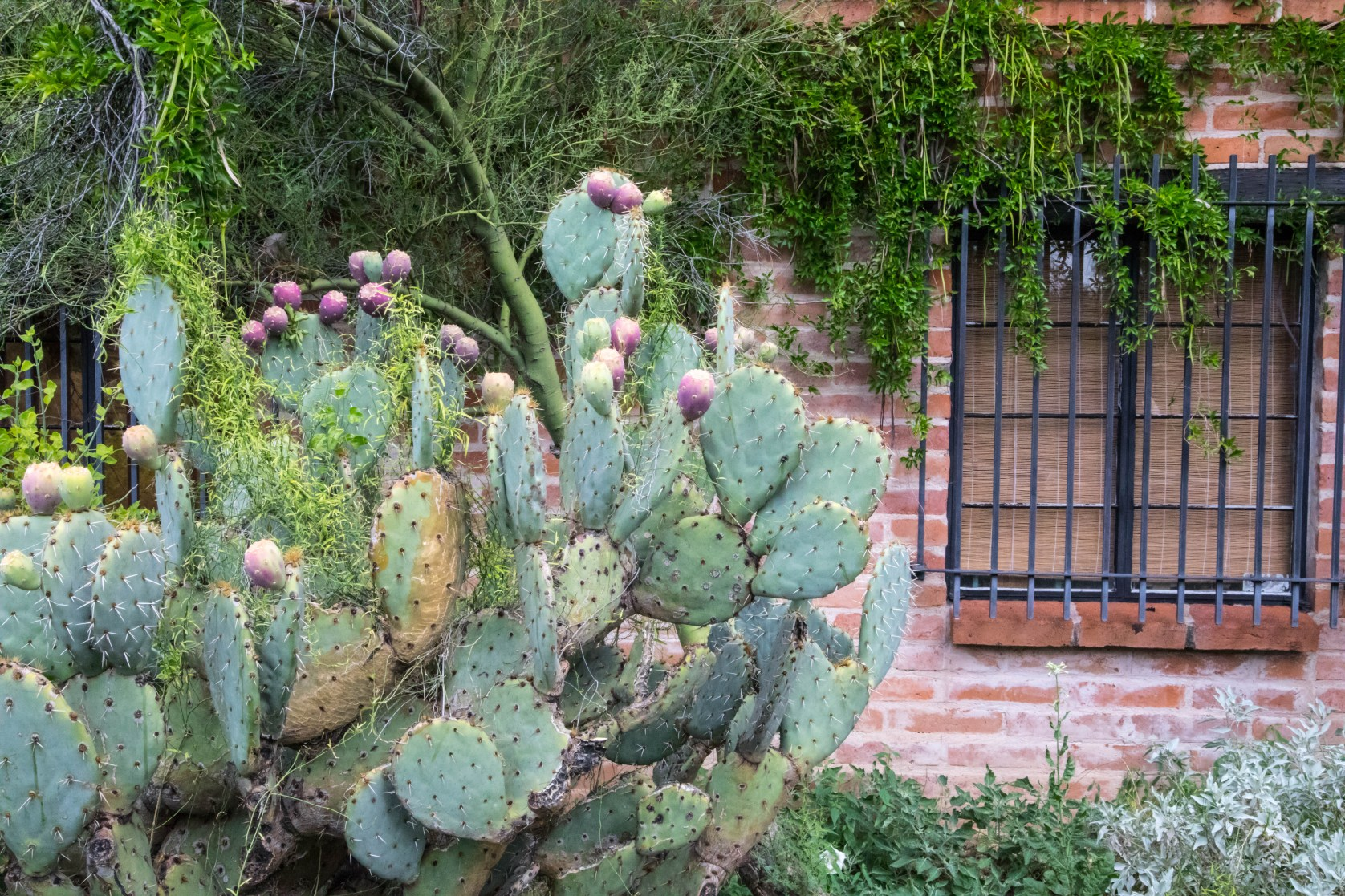 Tucson Arizona Cactus and Brick House in the Desert by Annie Fairfax