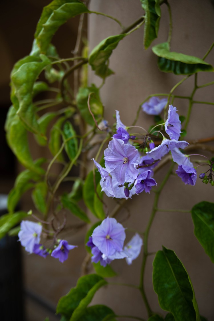 5 Incredible Michigan Flower Festivals