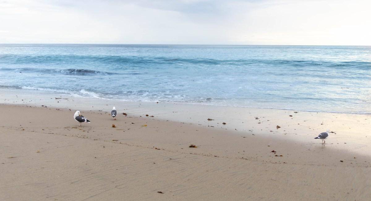 Laguna Beach: The Ultimate Travel Guide