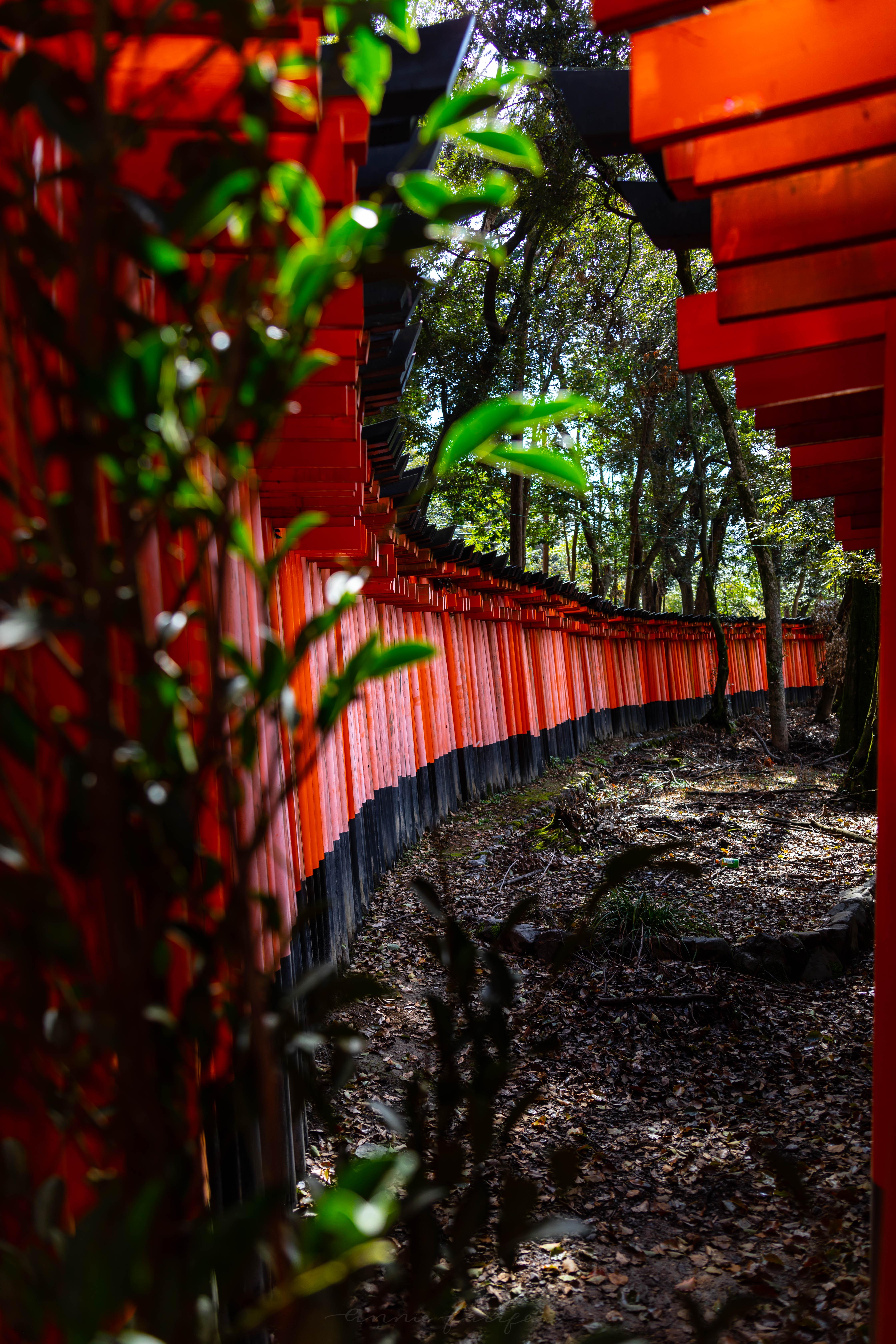 Red Japanese Torii Gates at Fushimi Inari Shrine Kyoto