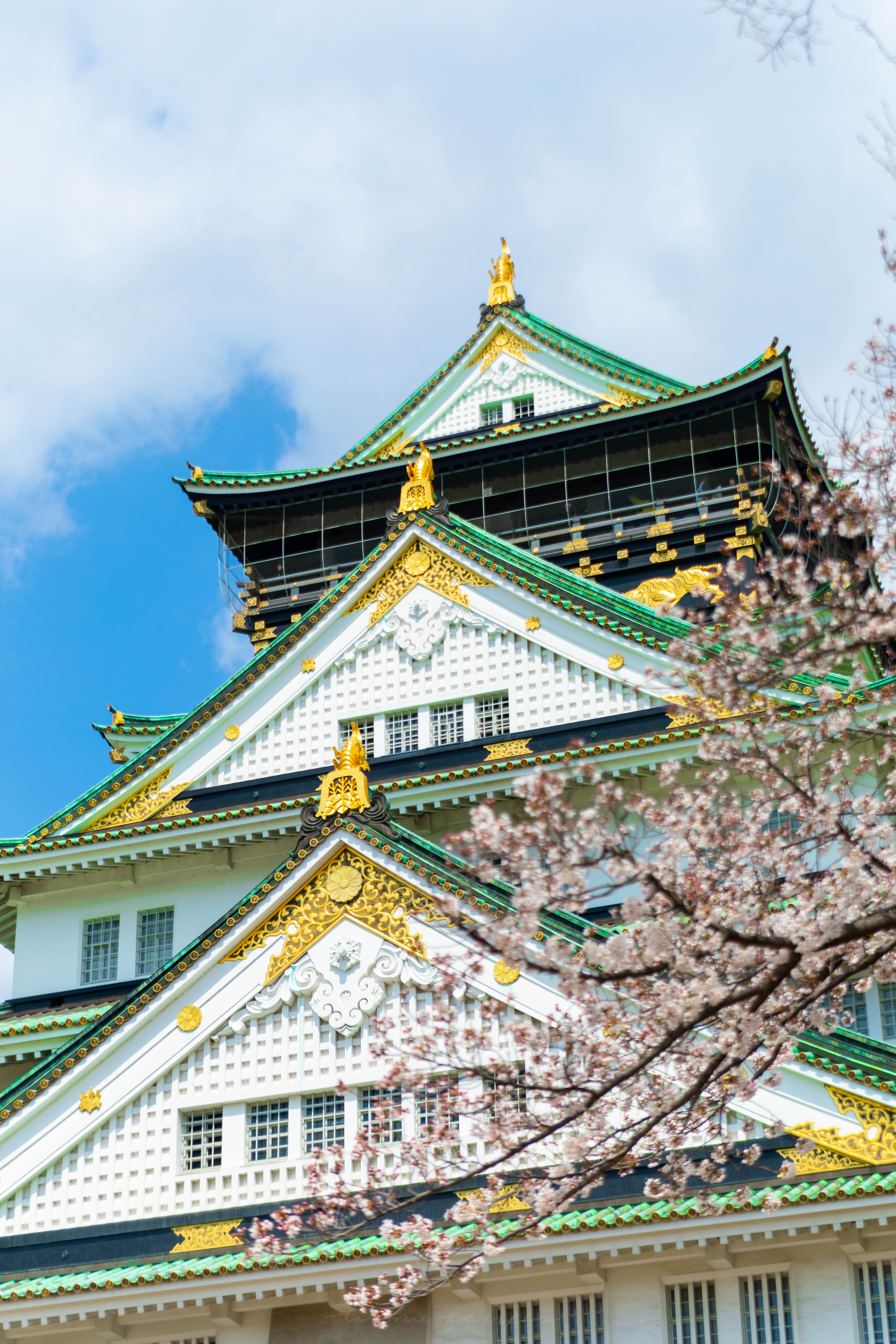 Cherry Blossoms in Osaka Castle Gardens  Where to See Cherry Blossoms in Japan by Annie Fairfax