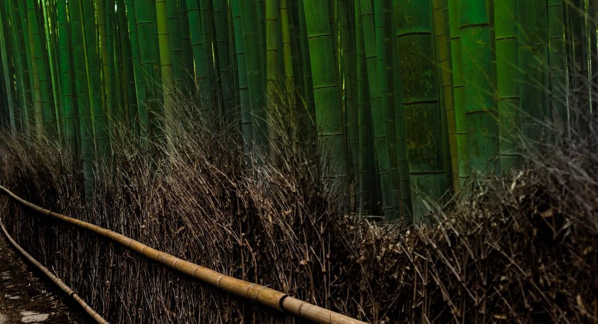 Visiting Arashiyama Bamboo Grove in Kyoto, Japan