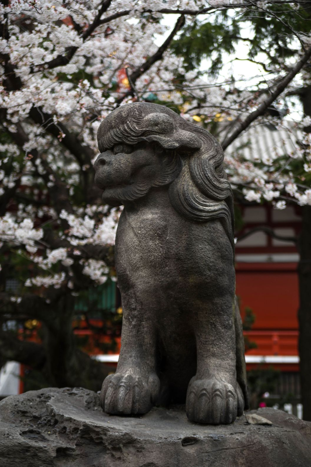 Stone Lion at Senso-Ji Temple Asakusa Kannon Buddhist Temple in Tokyo, Japan Shrine with Massive Red Japanese Paper Lanterns Near Tokyo Sky Tree Goddess of Mercy by Annie Fairfax Where to Visit Tokyo Things to do In Tokyo, Japanese Travel Tourism Trip Inspiration Pictues of tokyo Japan