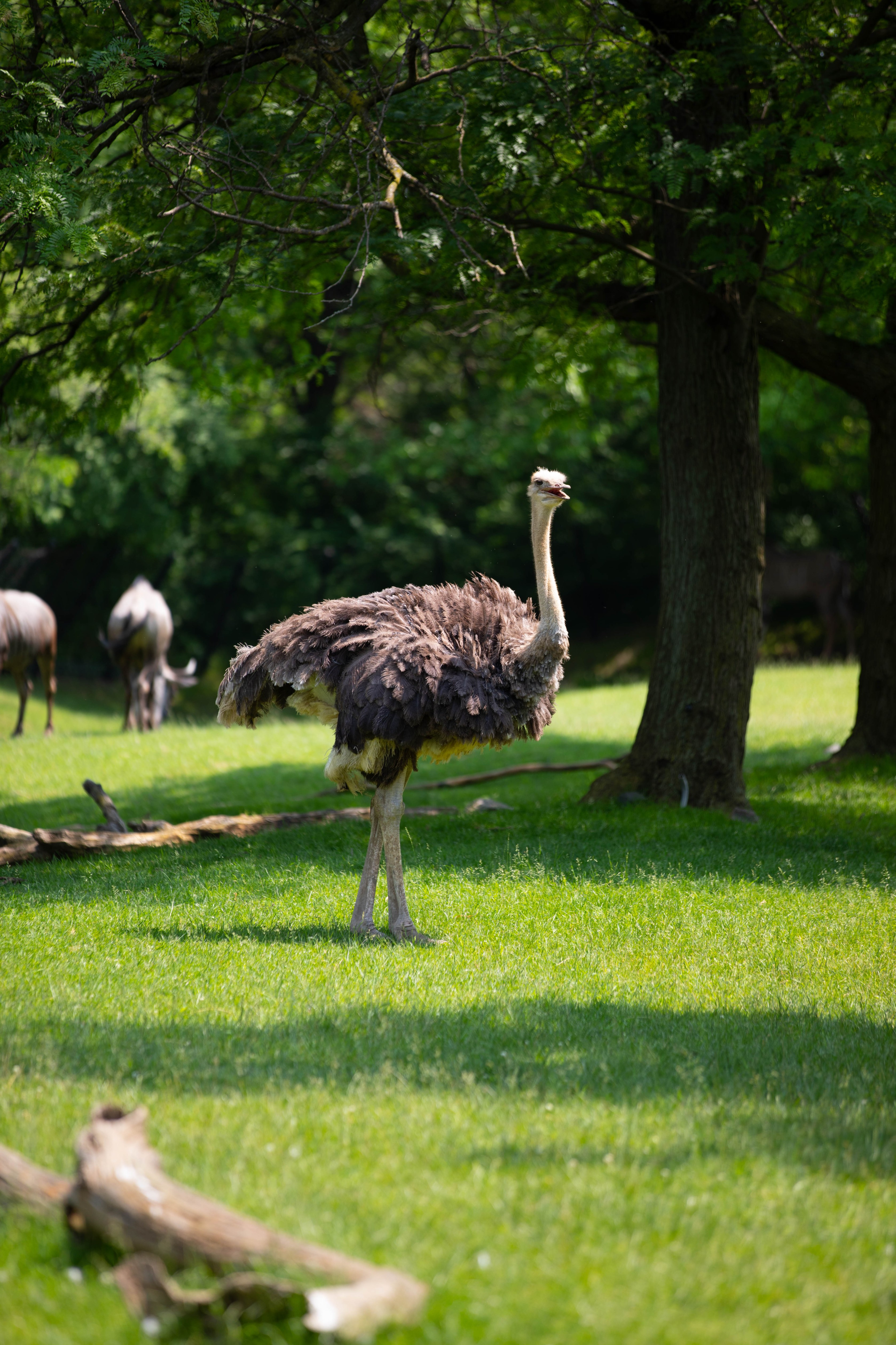 Indianapolis Travel Guide Emu Indianapolis Zoo and Botanical Garden Where to Stay What to Eat What to Do Museums Gardens indy 500 Travel Guide