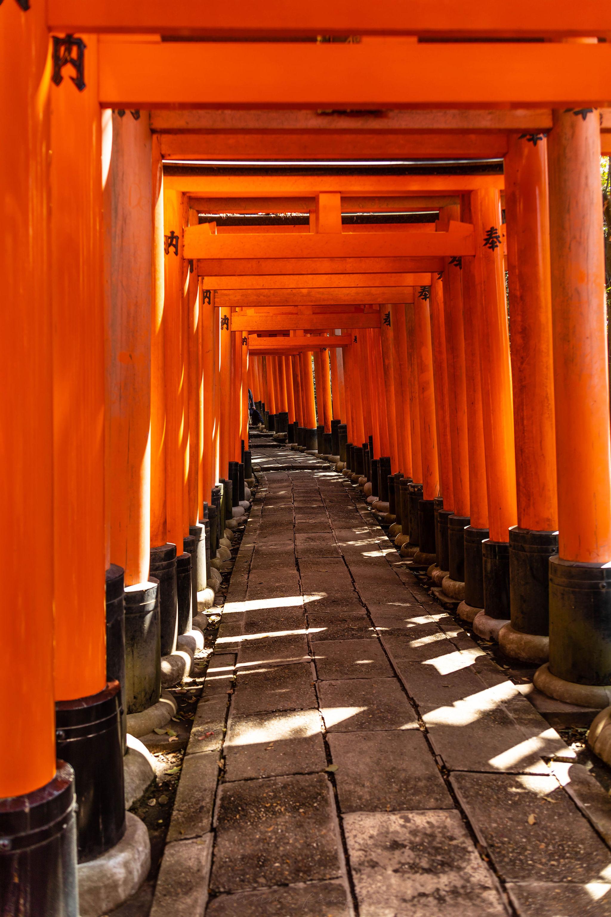 Fushimi Inari Shrien Red Japanese Torii Gates in Kyoto Japan