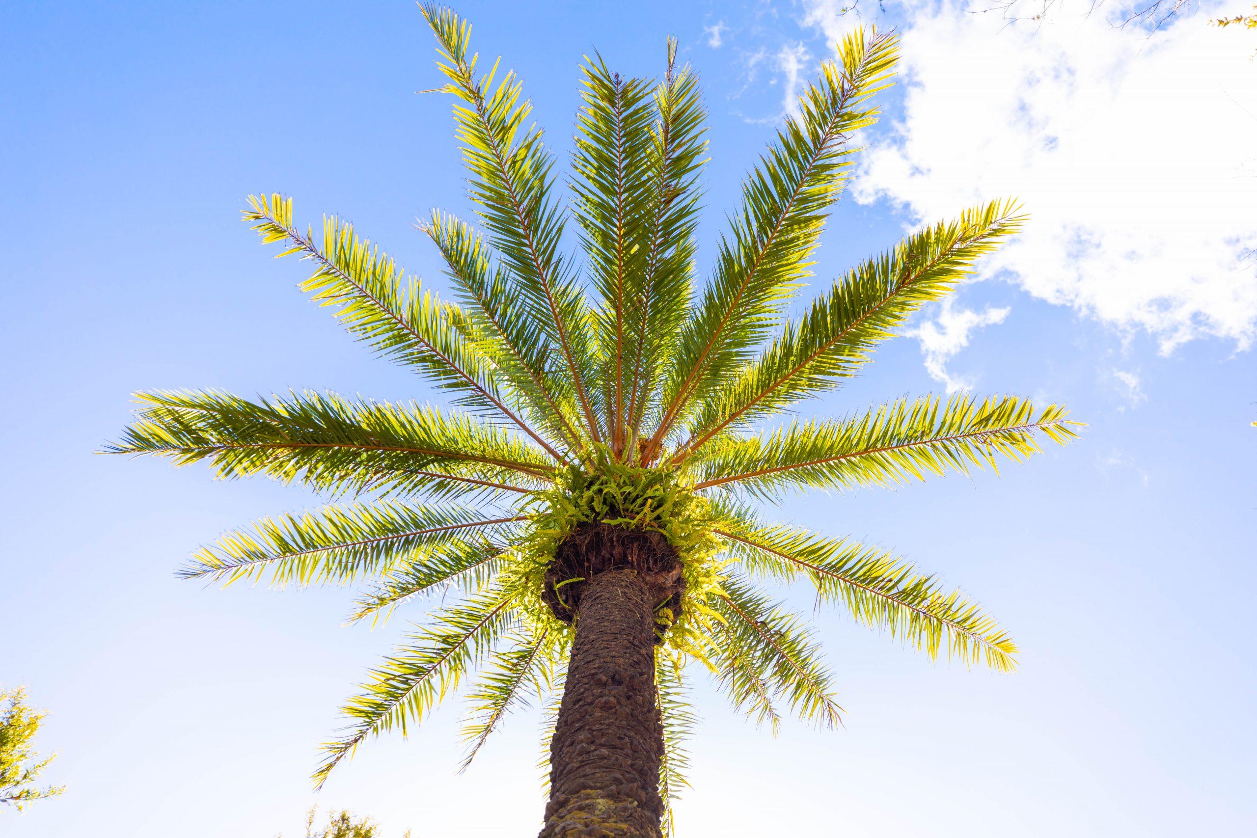 Orlando, Florida Luxury Travel Guide by Annie Fairfax