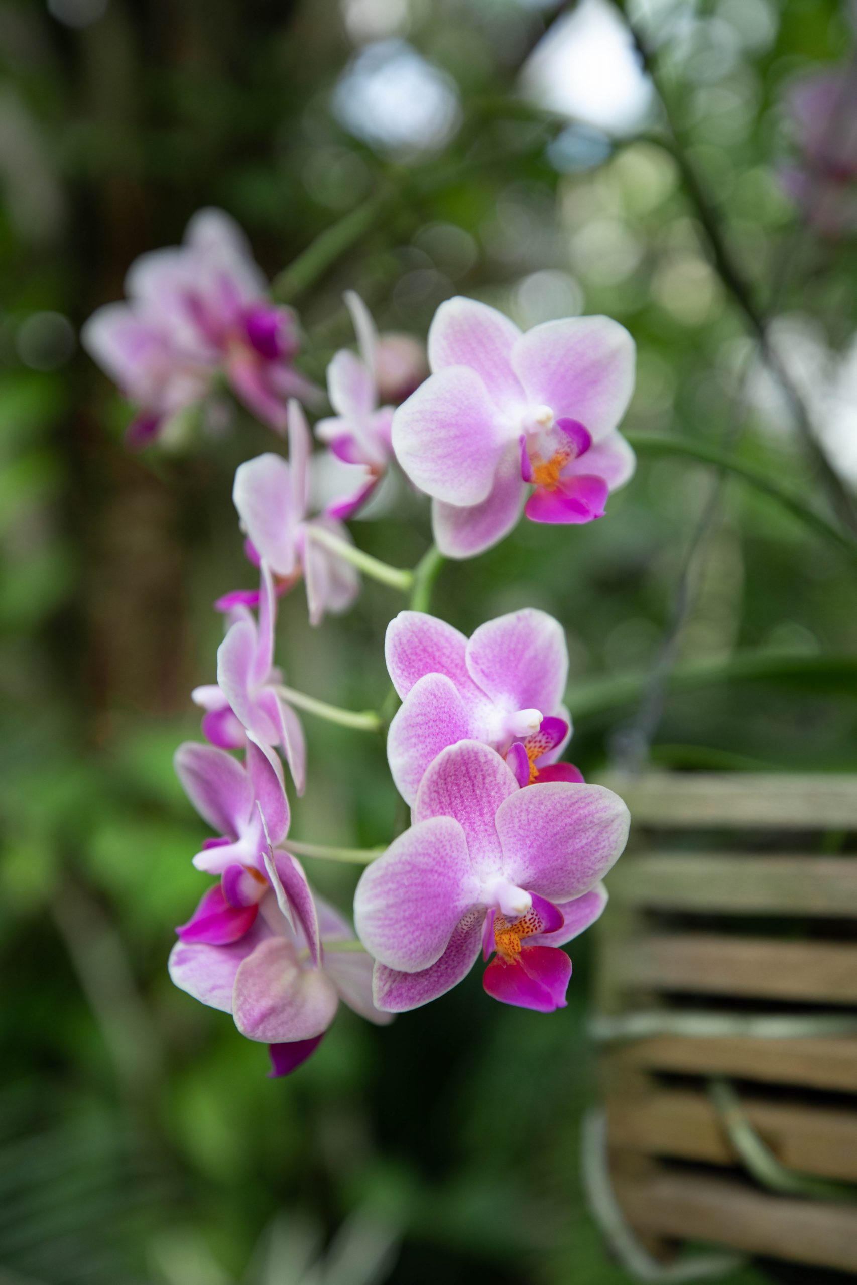 Orchids Inside Conservatory Greenhouse in Charleston, South Carolina
