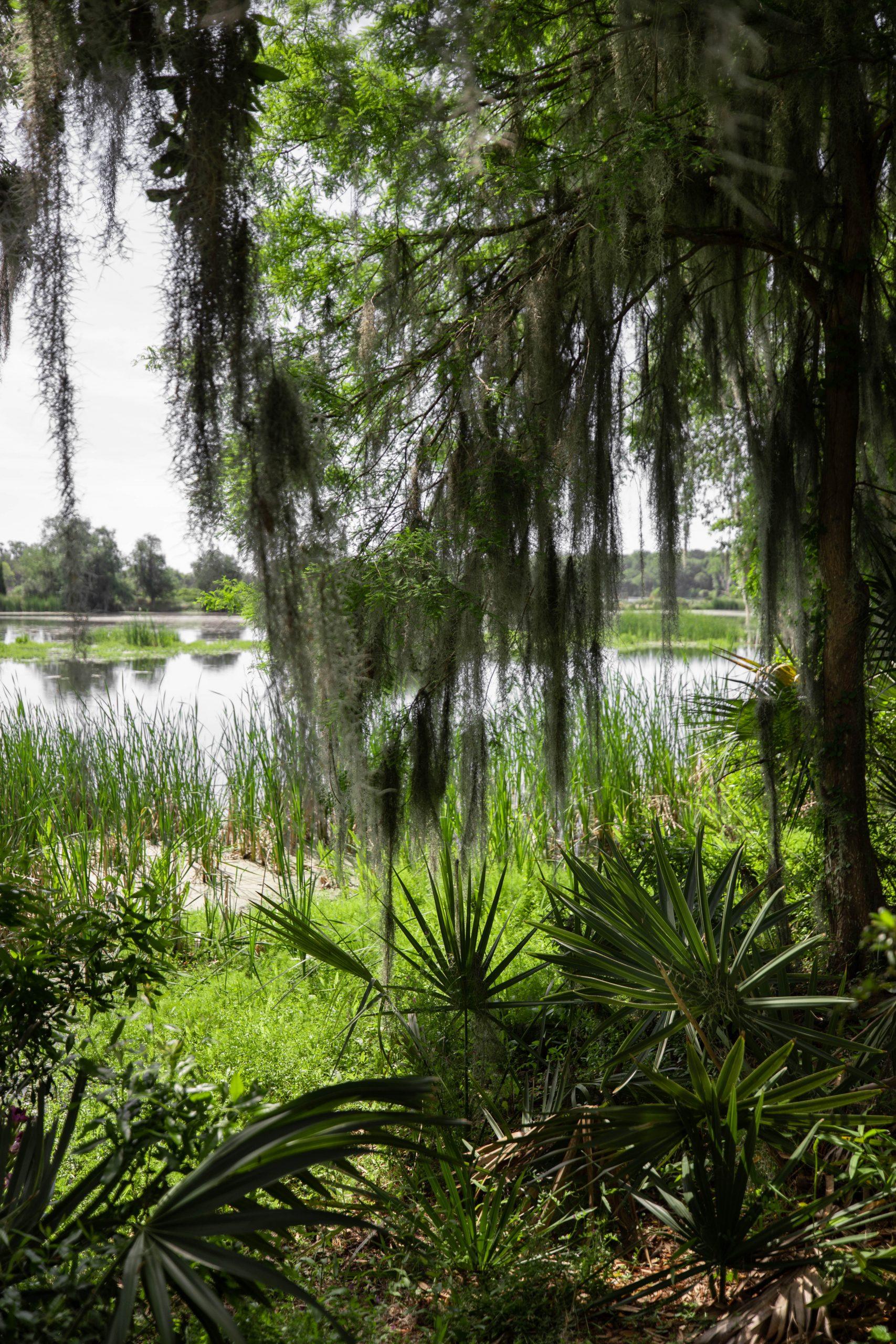 Magnolia Plantation & Gardens Written & Photographed by Annie Fairfax