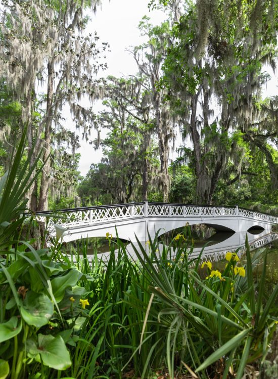 White Wooden Bridge at Magnolia Plantation & Gardens Written & Photographed by Annie Fairfax