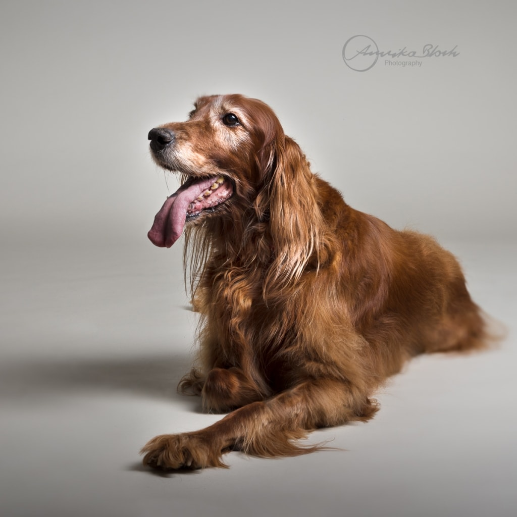 Dog Photography in Queens Park, Central London