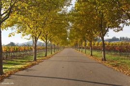 alley-wine-country