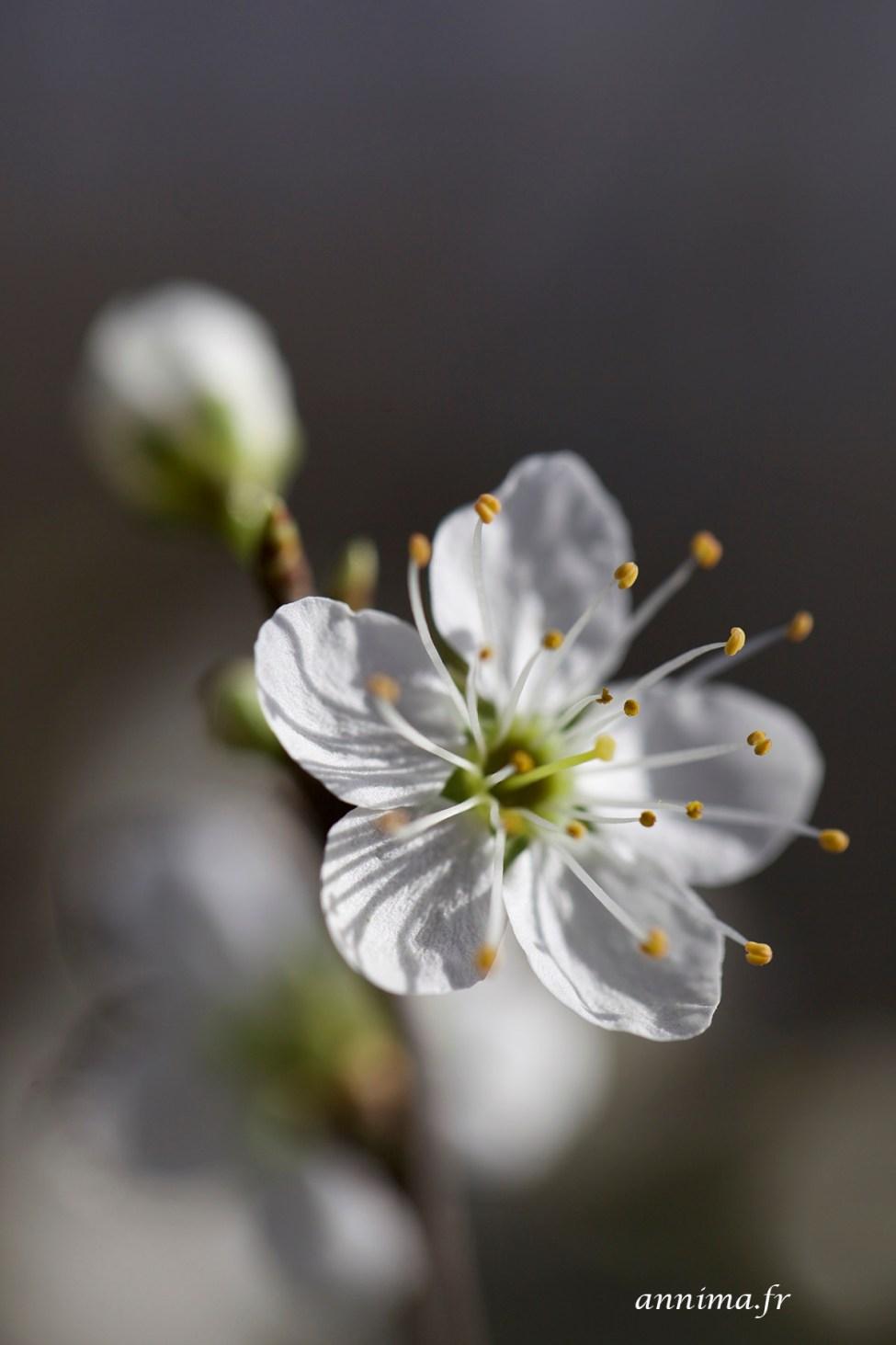 Printemps-fleurs14