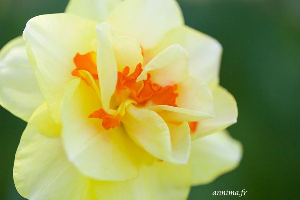 Printemps-fleurs4