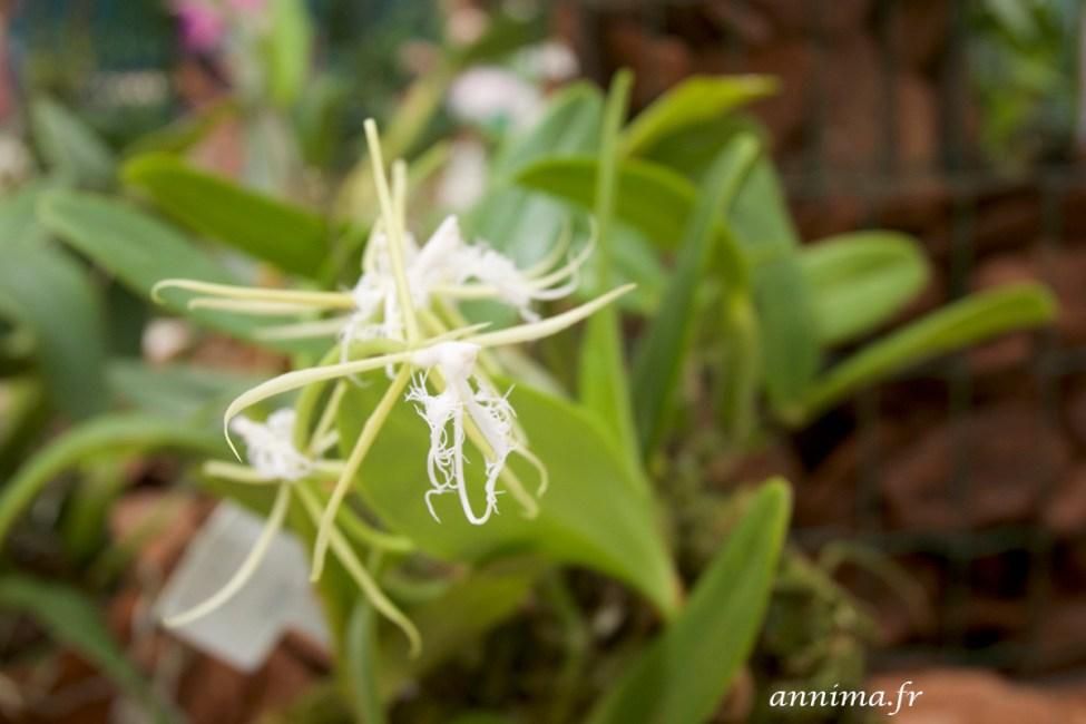 jardin-botanique-rio29