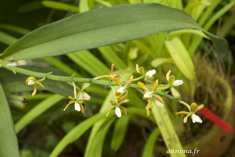 jardin-botanique-rio35
