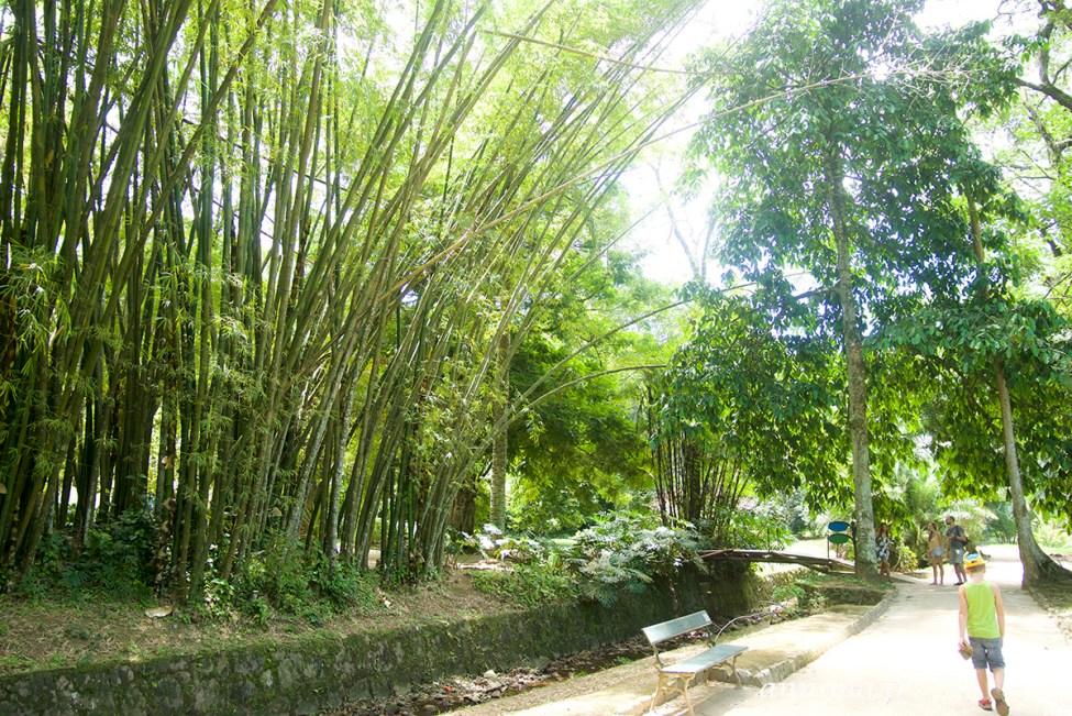 jardin-botanique-rio41