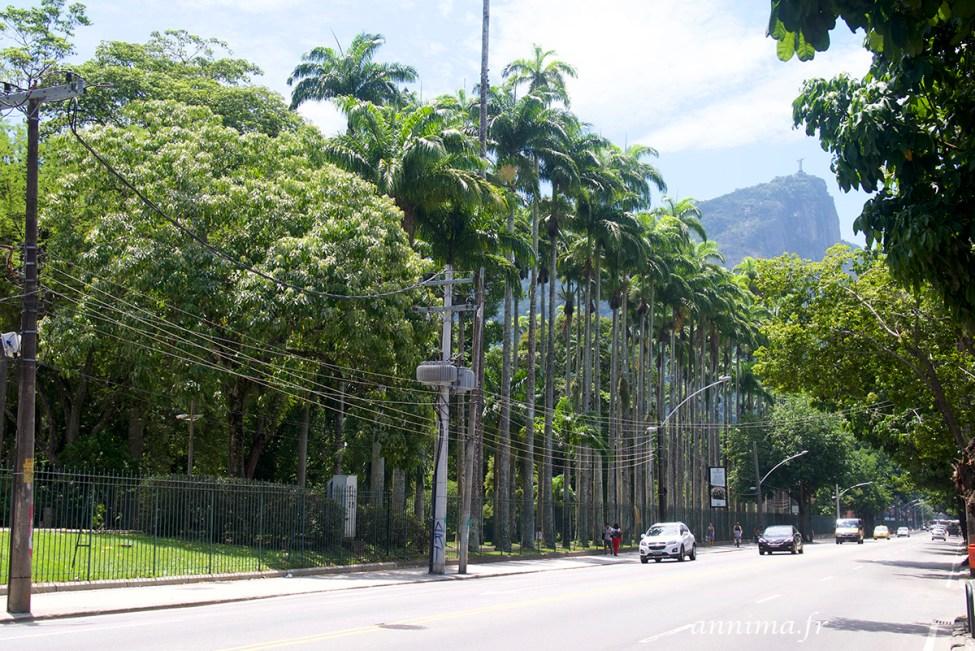 jardin-botanique-rio47