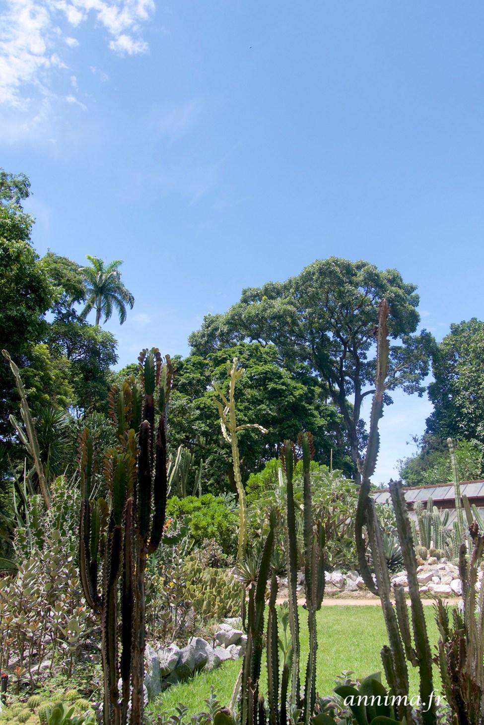 jardin-botanique-rio9