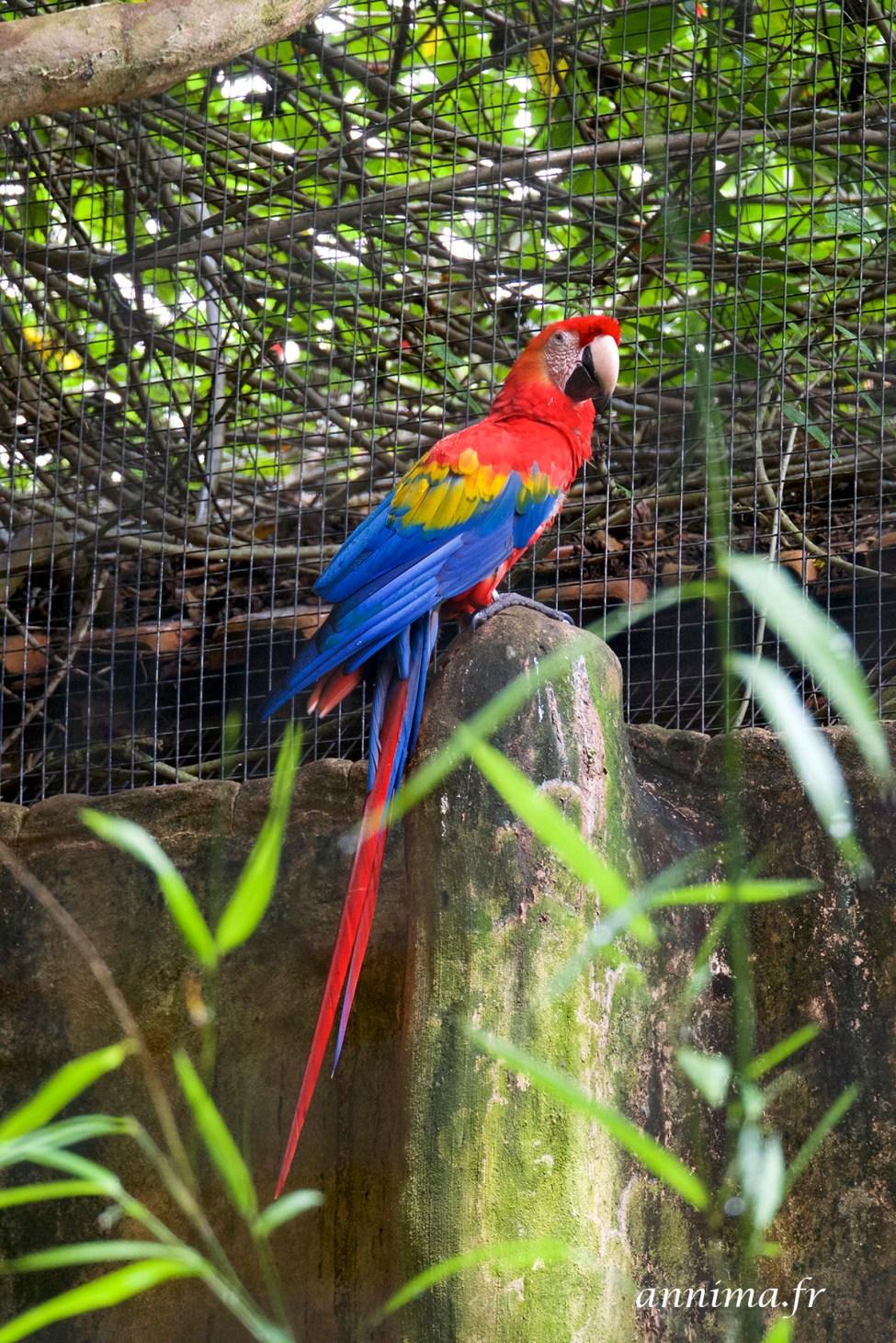 parc-des-oiseaux6