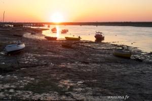 dès l'aube avec les pêcheurs de poulpes de l'Algarve.