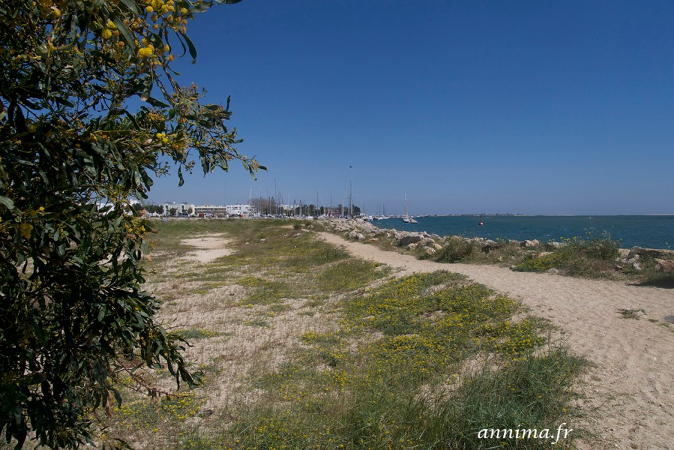 Portugal-Algarve-ria-formosa