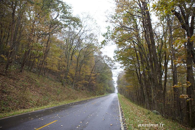 USA : traverser le Parc National du Shenandoah et croiser un ours.