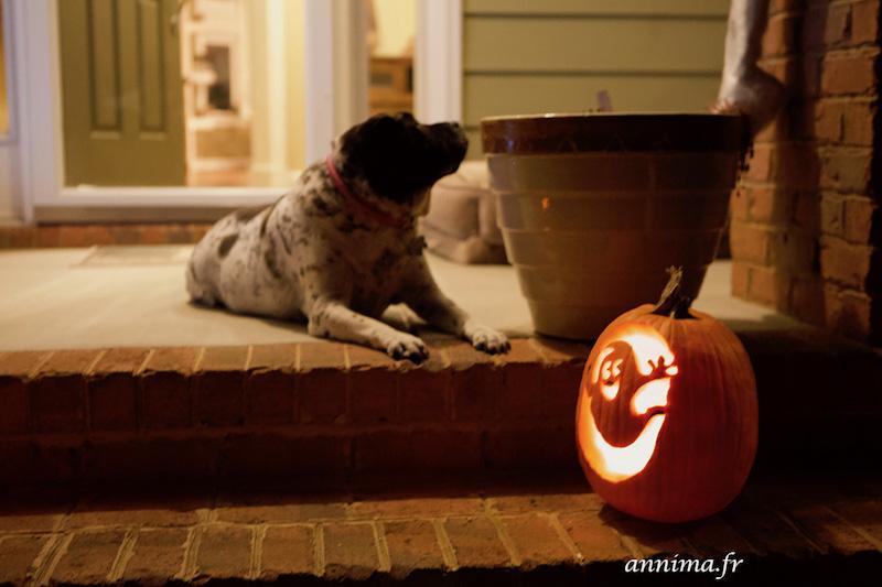 Vivre Halloween aux USA