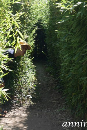 Labyrinthe bambous