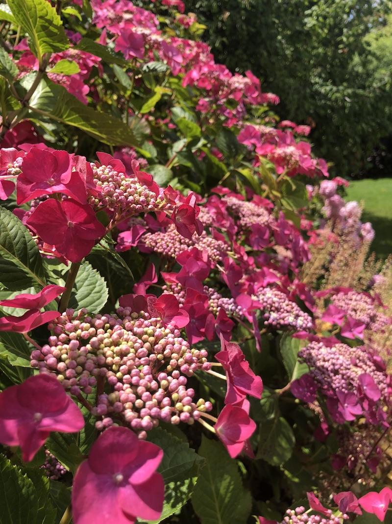 Le jardin des Martels pink