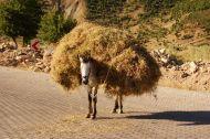 Nice coat Mr Donkey