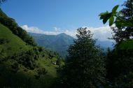Tea plantations along the Black Sea