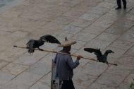Fisherman and his fishing birds