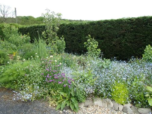 'Spring' polyculture, including chives, other onions, kales, Good King Henry and much more
