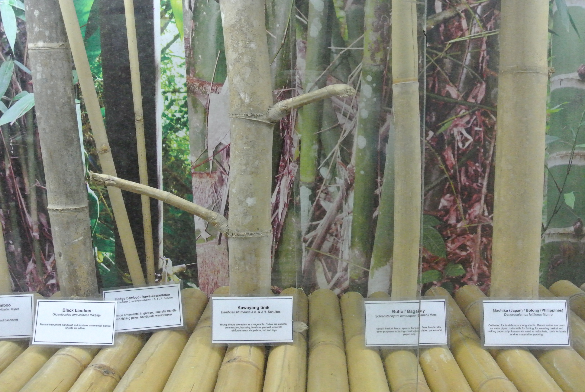 A Few Uses For Bamboo And Its Importance In The