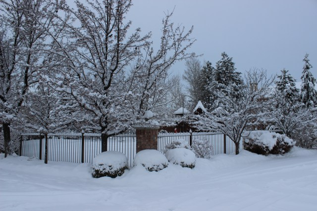 The Pear Trees in Snow by Our Playground