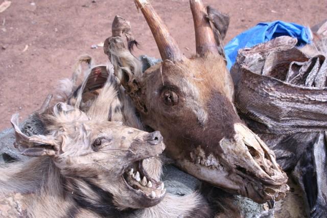 Mali 2010 (81)