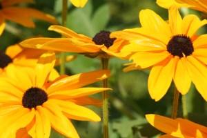 Flowers July 2008 018