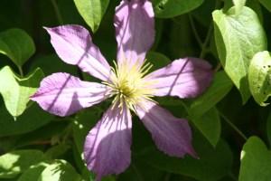 Flowers July 2008 042