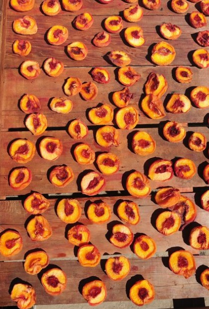 Drying Peaches 3