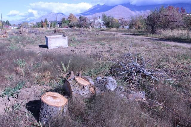 2014-10-27 Farley Orchard Murdered (13)
